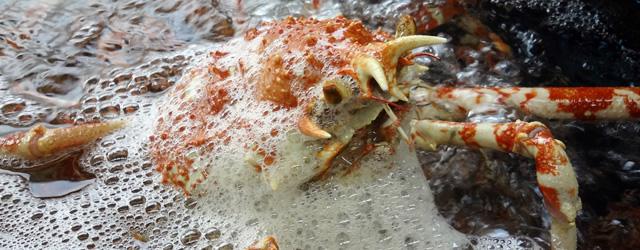 世界最大の甲殻類「高足ガニ」